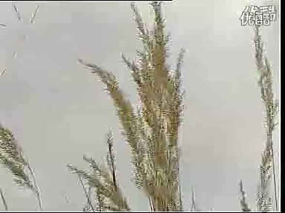 小曾-军中绿花 - 人民网微视频