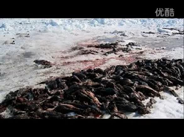 阿尔卑斯溶冰中现80具士兵遗体