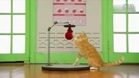 猫咪开锁易如反掌 喵星人技能大比拼