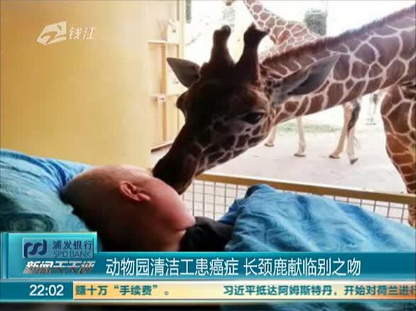 动物园清洁工患癌症 长颈鹿献临别之吻