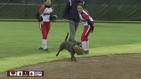一只爱打垒球的狗狗 搅乱整个比赛