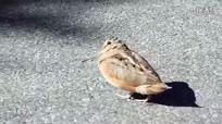 搞笑动物!一只会跳舞的小鸟