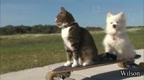 碉堡了的滑板喵星人!