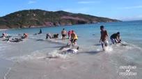 海滩有爱一幕:30海豚搁浅众人送回海中