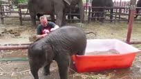 爆笑!萌蠢小象洗澡各种滑倒自嗨 长得萌就是任性!