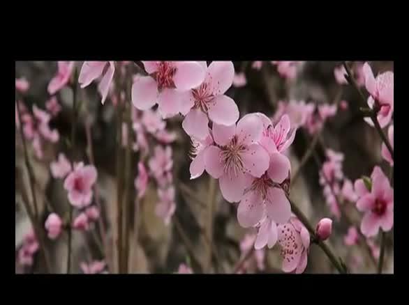 实拍三月江南诗的意境花的海洋