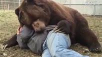 实拍男子与巨熊关系亲密 躺地上依偎睡觉