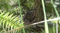 近距离实拍小鸟巢中待哺