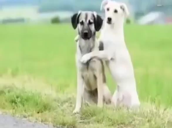 好暖心的场景 人与动物亲密无间