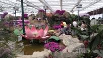 中国首届大型蝴蝶兰博览会惊艳亮相