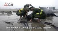 浑身是伤!7米长座头鲸搁浅海滩