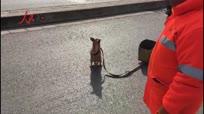狗狗站立行走 还能帮环卫工主人干活