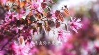 四月丨春·花语:写在我如沐春风的心里