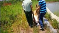 警民联手救助走失国家一级保护动物梅花鹿