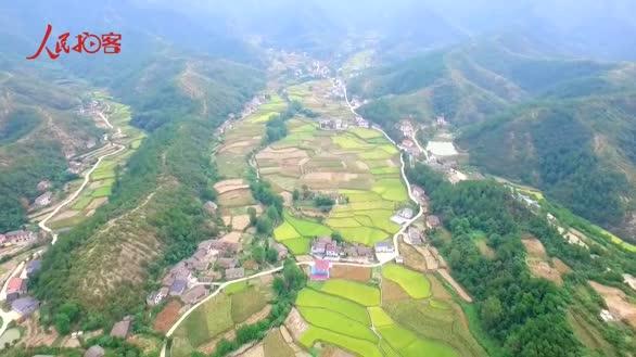 【大美中国 看壮丽河山】航拍鄂西千亩金色稻田 乡村风情别样美