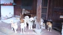 宁波七旬老人五年收养流浪狗一百多只  省下医保钱为买狗粮