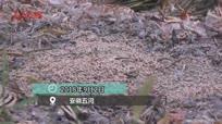 沱湖水体遭污染 鱼虾蟹大量死亡