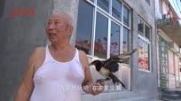 八旬老人捡到受伤小乌鸦 精心喂养不离不弃成宠物
