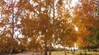 【大美中国 看壮丽河山】秋天的味道