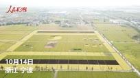 【晒·身边的变化】航拍宁波农民喜迎改革开放四十年 稻田种出彩色卡通萌萌哒