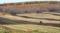 【金秋垄上行】内蒙古大兴安岭金秋忙碌的田野