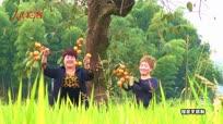 【金秋垄上行】百年老柿树丰收结硕果