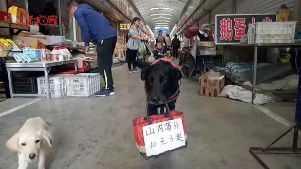 聪明狗狗每天嘴叼篮子为主人做广告 成市场明星狗狗