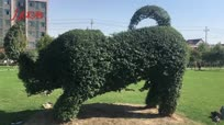 艺术家脑洞大开 绿植修建成大公牛