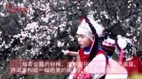 """花开彩云南:邀你到大理共赴一场""""梅花之约"""""""