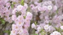 春暖花又开百花争艳五彩缤纷 浓浓春的气息