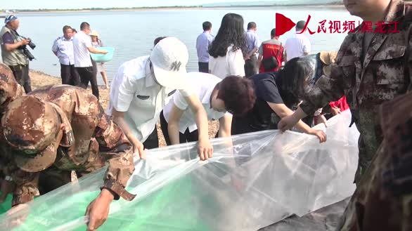 中国北疆首次在黑龙江上游放流12万尾施氏鲟