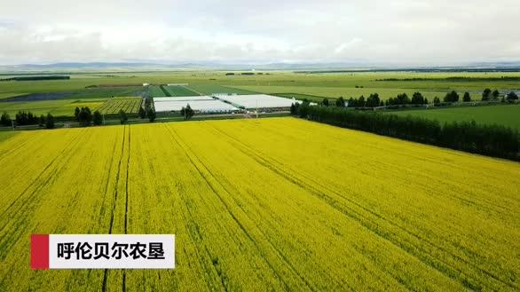 夏季呼伦贝尔农垦的田园风光