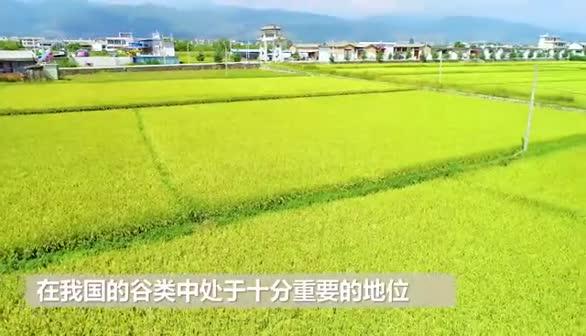 """听见·70年里的""""今天"""":首届国际水稻大会举行"""