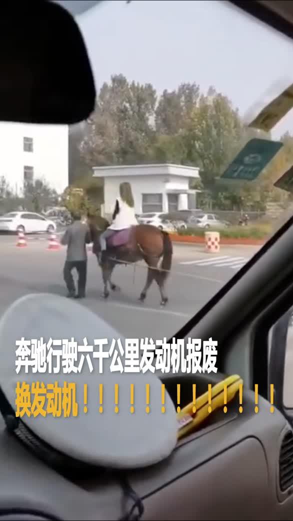 山东省滨州事街头!女子骑马拉奔驰!啥情况?