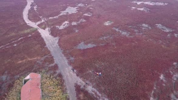 航拍消失三十年的红海滩再现东港湿地