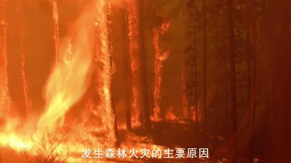 防火公益短片提醒您:一点星星火 可毁百年林