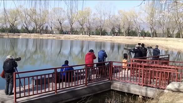 3月17日拍摄的颐和园,满园春色关不住