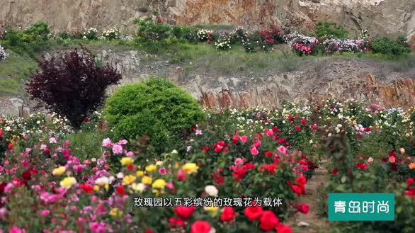 简直就是宝藏公园!有化石、有石林,还有漫山遍野盛放的玫瑰!