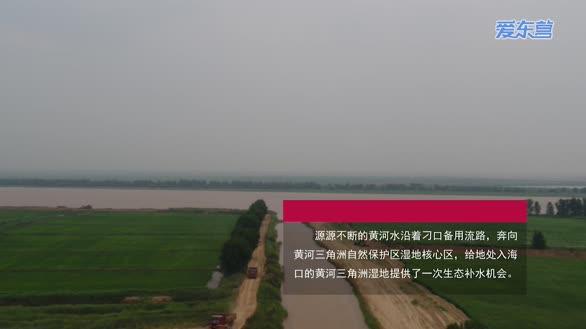黄河洪峰入海 黄河三角洲湿地全力生态补水