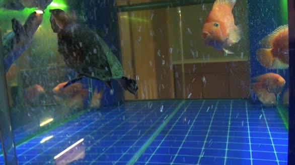 金鱼和乌龟鱼缸里嬉闹一首《求佛》期待重逢,感天感地感动人