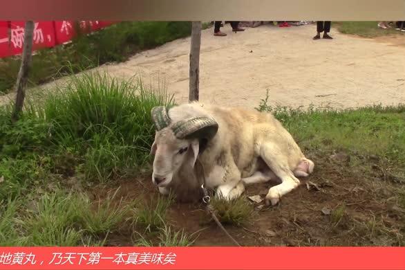 山东第八届伏羊旅游文化节开幕(上)