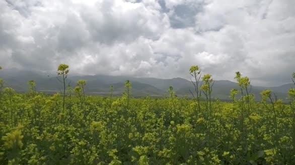 夏天,自驾青海湖看油菜花
