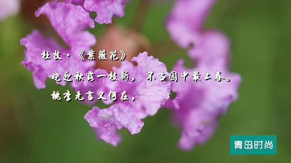 """这个神仙""""颜值""""的紫薇花园,拍照发朋友圈不香吗?"""