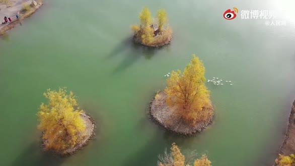 秋天的胡杨林真的好美,想去打卡吗?
